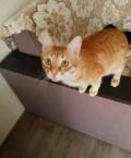Отдадим кота, кастрирован, приучен к лотку, Казань