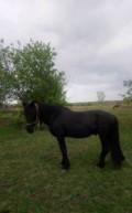Продам лошадь, Тамбовка
