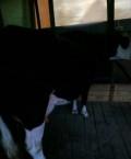 Корова, Краснохолм