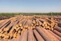 Продам летнюю Дляну цена за 1 куб деловой леса, Ханты-Мансийск
