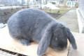 Кролики разных пород, Саратов