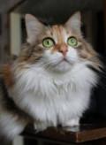 Кошка с перламутровыми глазами, Самара