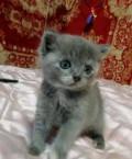Отдам в добрые руки котенка, Усвяты