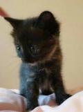 Котёнок 1.5, Ставрополь