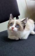 Котенок ищет дом, Тольятти