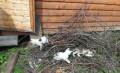 А у нас сегодня кошка родила вчера котят, Заинск