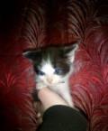 Котёнок, Ильинский