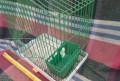 Клетка для птиц, Липин Бор