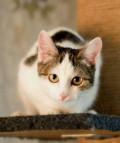 Кошка ищет дом, Пенза