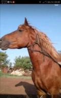 Лошади, Татарская Каргала
