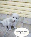 Собака, Благовещенск