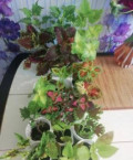 Комнатные цветы, Самара