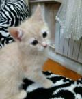 Котенок Элис, 2 месяца, Курья