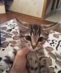 Котенок, Грачёвка