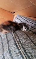 Кошечка. возраст около двух месяцев, Кирсанов