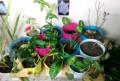 Комнатные цветы, Моряковский Затон