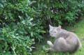 Стерилизованная кошка бесплатно в добрые руки, Решетниково