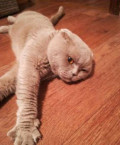 Отдам котика в хорошие руки, Калуга