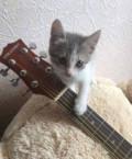 Отдам котенка в хорошие руки, Домбаровский