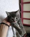 Отдам котят в добрые руки, бесплатно, Красноармейское