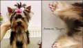 Антицарапки (колпачки на ногти) для собак, Аткарск