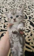 Отдам котят, Акуша