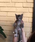 Котёнок(девочка), Чалтырь