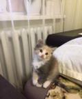 Котята, Сакмара