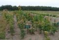 Лиственные деревья любого размера и в любом количе, Мичуринск