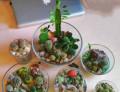 Флорариум живой с сувенирами, игрушками и без, Пенза
