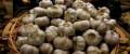 Чеснок ядреный домашний новый урожай, Чебоксары