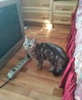 Кошка, Набережные Челны
