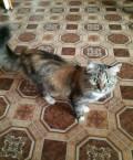 Кошка в добрые руки, Екатеринбург
