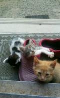 2 слепых игривых котеночка и 1 фартовый ищут добру, Ставрополь