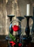 Роза в колбе, Пенза