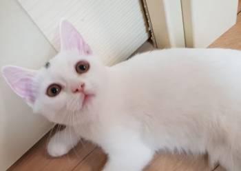 Отдаю котят