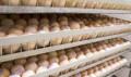 Инкубационное яйцо круглогодично, Сызрань