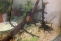 Кормовые насекомые сверчки, тараканы, зофобас, Новая Чигла