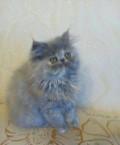 Пушистый котенок, Лобаново