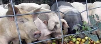 Отходы пищевые для животных