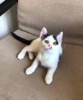 Кошечка 3 месяца, отдам в добрые руки, Сургут