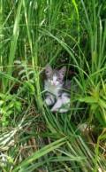 Котёнок, Большие Уки