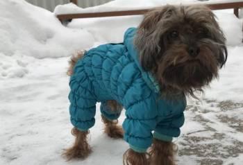 Комбинезон для собак мелких пород Новый