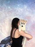 Продам щенков с отличной родословной, Балашов