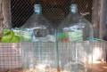 Бутыли стеклянные 20 литров (СССР), Саки