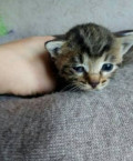 Маленький котенок. Мальчик. В добрые руки, Балабаново