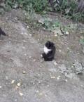Котята, Малышева