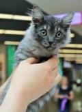 Котенок в добрые руки, Красный