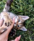 Котенок девочка, Балашов