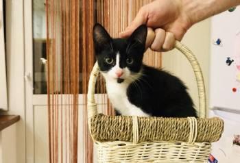 Активный котик ищет заботливые руки